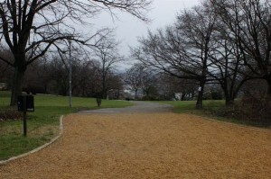 carare prin parc