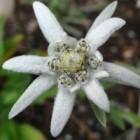 Flori rare in Romania