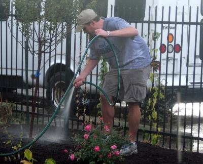 udarea solului la plante