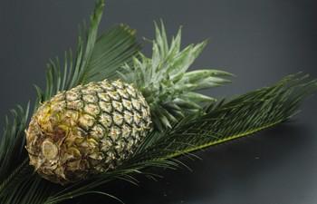 alimente sanatoase ananasul
