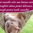 Concurs foto: vacanta animalutelor