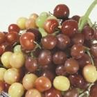 Dieta cu struguri si prune
