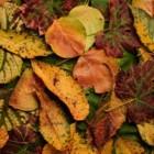 Cate frunze adunate fac o toamna?