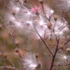 5 motive pentru a-ti imbunatati viata sexuala cu ajutorul polenului