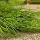 2 plante care te vor ajuta sa-ti reglezi nivelul de testosteron