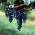 Secretul ascuns in fructele de toamna – frumusetea pielii