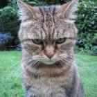 De ce sunt agresive pisicile?