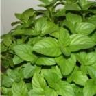 Plante medicinale pentru gradina ta
