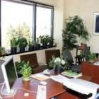 Plantele la locul de munca