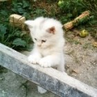 Jurnalul pisicii tale