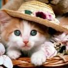 Expozitia de pisici