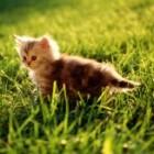 Pisica zi de zi