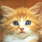 De ce sa alegi sterilizarea pisicii tale?