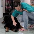 Cum alegi veterinarul pentru cainele tau?