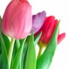 Romantismul florilor