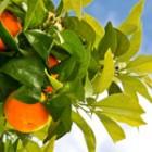 2 kg in 2 zile cu portocale