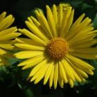 Remedii naturiste pentru acnee