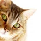Limbajul pisicutelor
