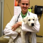 De ce sa mergi la veterinar?