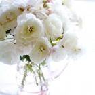 Flori si iubire
